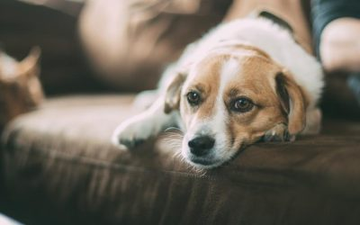 Sick dog? Give your dog these natural remedies